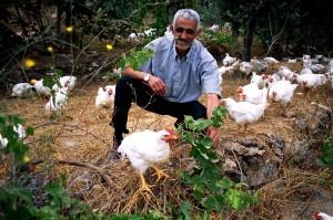 Libanon, landbouwer, kuikens