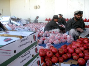 local, farmers, sorting, packing, pomegranates