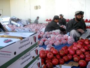 lokale Bauern, Sortierung, Verpackung, pomegranates