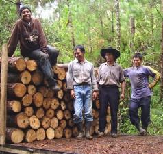 bucherons, hommes, forêt, travaux