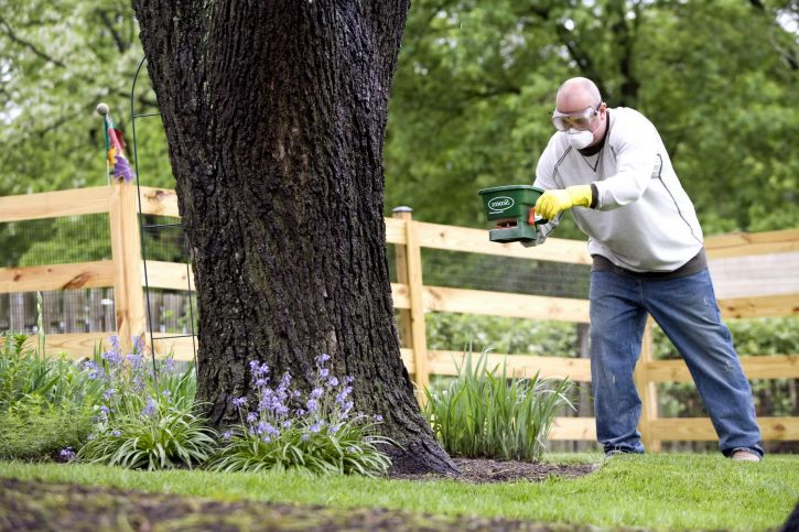 man, applying, fertilizer, garden