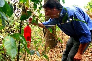 Omule, demonstrează, organice, cafea, ferma, distilatul, plastic, bauturi, sticle, pictat, roşu