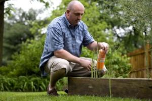 homme, apprécier, jardinage