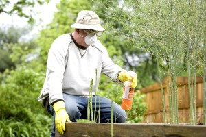 man, fertilizing, applying, pesticide, spray, plants, garden