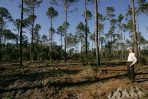 man, forest, observes, restored, pine, forest, habitat