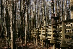 man, observes, wildlife, refuge, boardwalk