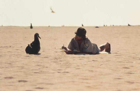 man, beach, bird