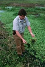 man, standing, wetland area, invasive