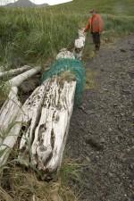 homme, debout, long, vieux, arbre, tronc, élevé, herbe
