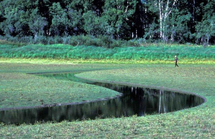 людина, ходити, болото