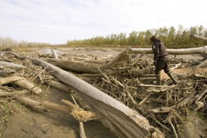 man, walking, shore, wood