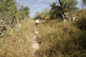 čovjek, šetnje, put, pustinja