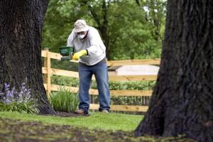 man, process, applying, fertilizer, base, one, hardwood, trees