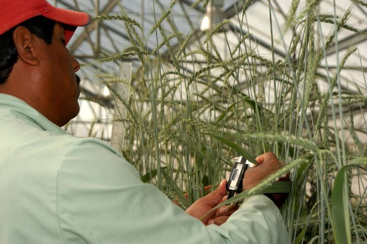 Meksiko, poljoprivrede, istraživanja, program
