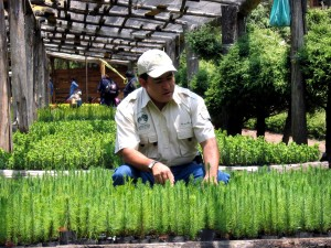 mexicos, zemědělské, programy, různé, plodin, výroba, zemědělci