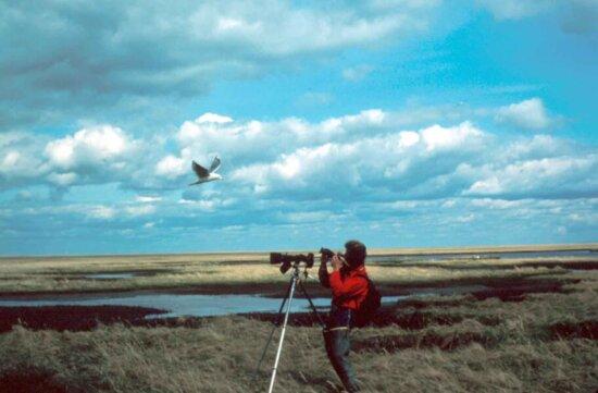 Príroda, fotograf, fotografovanie, zvieratá, divoké