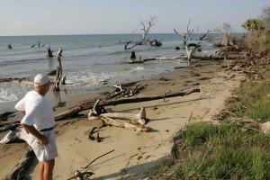 homme plus âgé, plage, regarder, vieux, arbres, sable