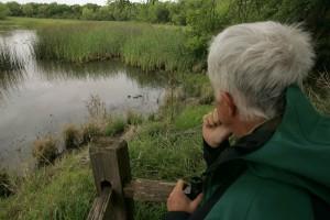 homme plus âgé, assis, assis, rivage, lac