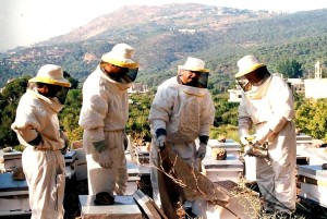 people, learning, skills, beekeepers