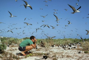 photographers, man, photograph, flock, birds, beach, bird