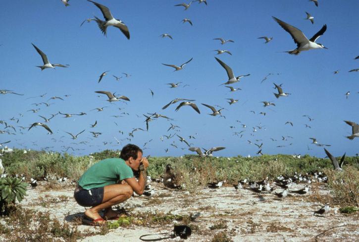 photographers, man, photograph, flock, birds, beach, bird