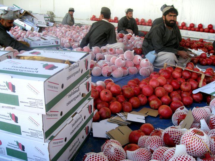 grenadiers, le tri, l'emballage, les fruits, l'exportation