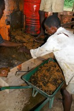 removing, cooked, palm, fruit, processing, palm, oil