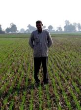 contadino, pari a zero, lavorazione del terreno, pianta, grano, riso