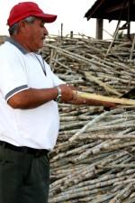 homme, pile, canne à sucre, San Salvador