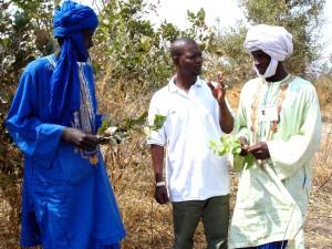 vyškolení, lesné, stráže, Senegal, povzbudiť, spoločenstiev, chrániť, common, prírodný, prostriedky