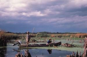 two, men, watching, waterfowl, birds, swamp, boat