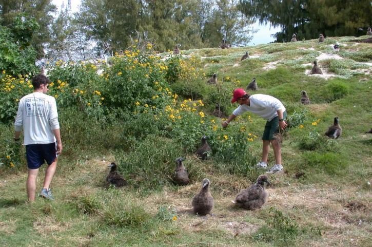 two, young men, field, albatross, birds