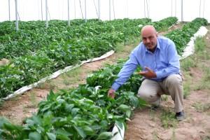 zachód bank, Gaza, rolnik, cieplarnianych