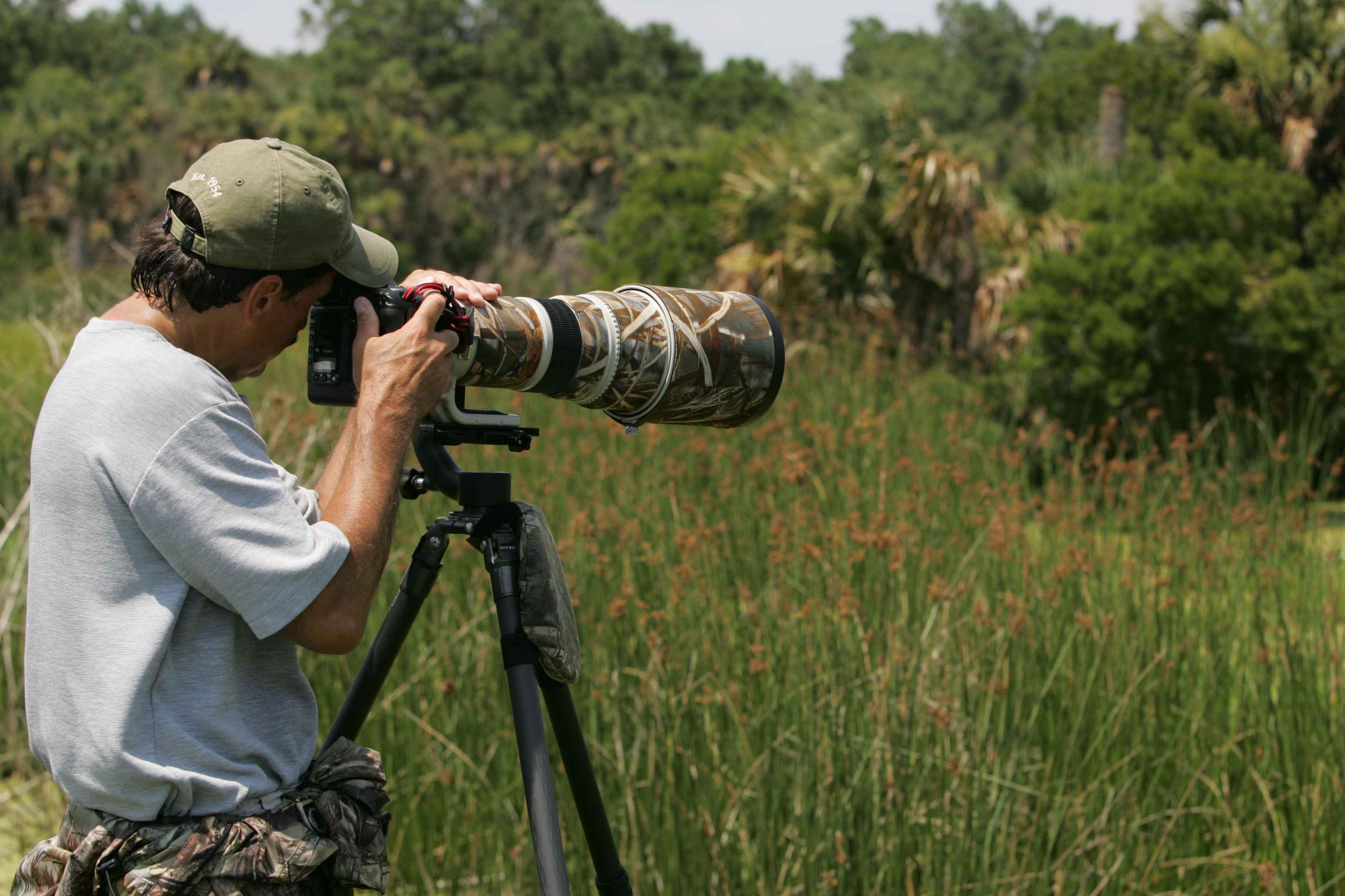 Free Picture Wildlife Photographer Captures Wildlife