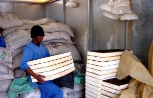 worker, Botswana, stacks, trays, melon, seedlings, transported, greenhouses