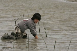 young man, wades, water, hands, knees, planting, marsh, grass