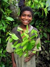mlad, lijep, dječak, stanovnik, Bajo, Mira, Frontera, tropska, šuma, zeleni listovi