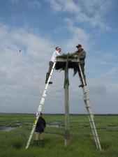 man, woman, standing, ladder, bird, nest