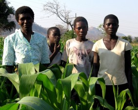 mother, three, children, stand, irrigated, field, Ntechu, Districit, Malawi