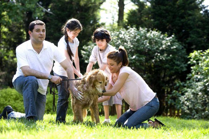 mother, father, children, washing, dog, Labrador, retriever, outside, fresh air