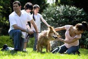 madre, joven, hija, hijo, padre, lavado, perro