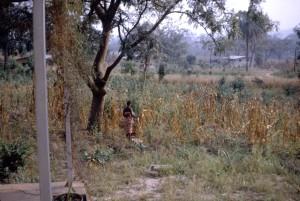 nigerian, woman, standing, field, guinea, corn