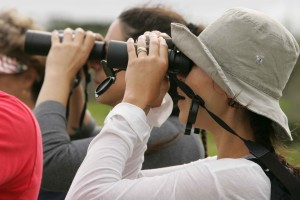 туристы, бинокль, тур, окружающей среды