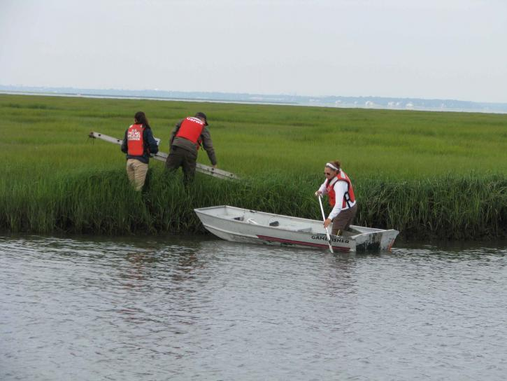 bateau, herbe, marais