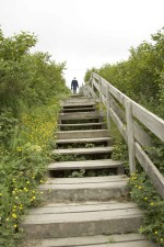 people, climb, wooden, stairs, overgrown, vegetation