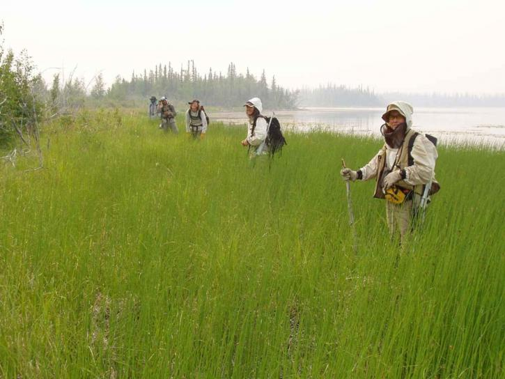 people, hike, forests, marshes