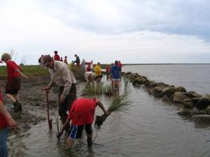mensen herbeplanting, gras, helpen, herstellen, kust