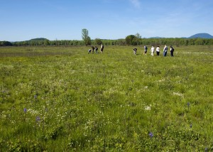 people, walking, fields, enjoy, flowers, prairie