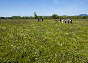 pessoas, andando, campos, desfrutar, flores, pradaria