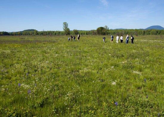 people, walking, fields, enjoy, flowers, prairie